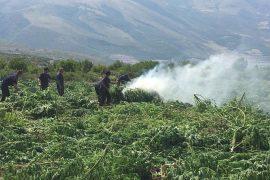 CdS: Albania, Cannabis Greenhouse of Europe
