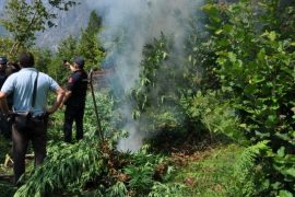 Austrian Deputy Hammer: Drug Cultivation and Traffic Obstacle for Negotiations