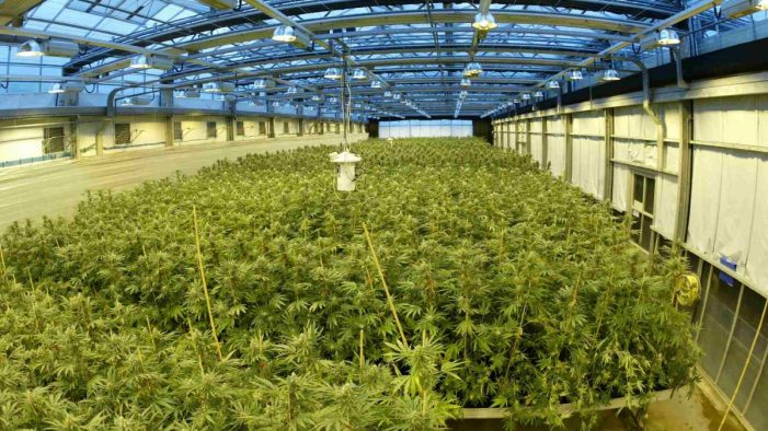 Drug Laboratories – How Did Cannabis Turn into an Industry?
