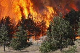 8 New Fires in 24 Hours, Dozens of Hectares Destroyed