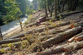 Albania Only European Country with Netto Deforestation