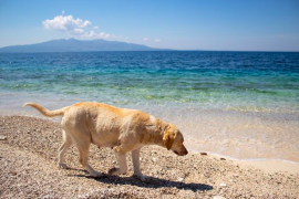New Initiative to Help Stray Animals in Sarande