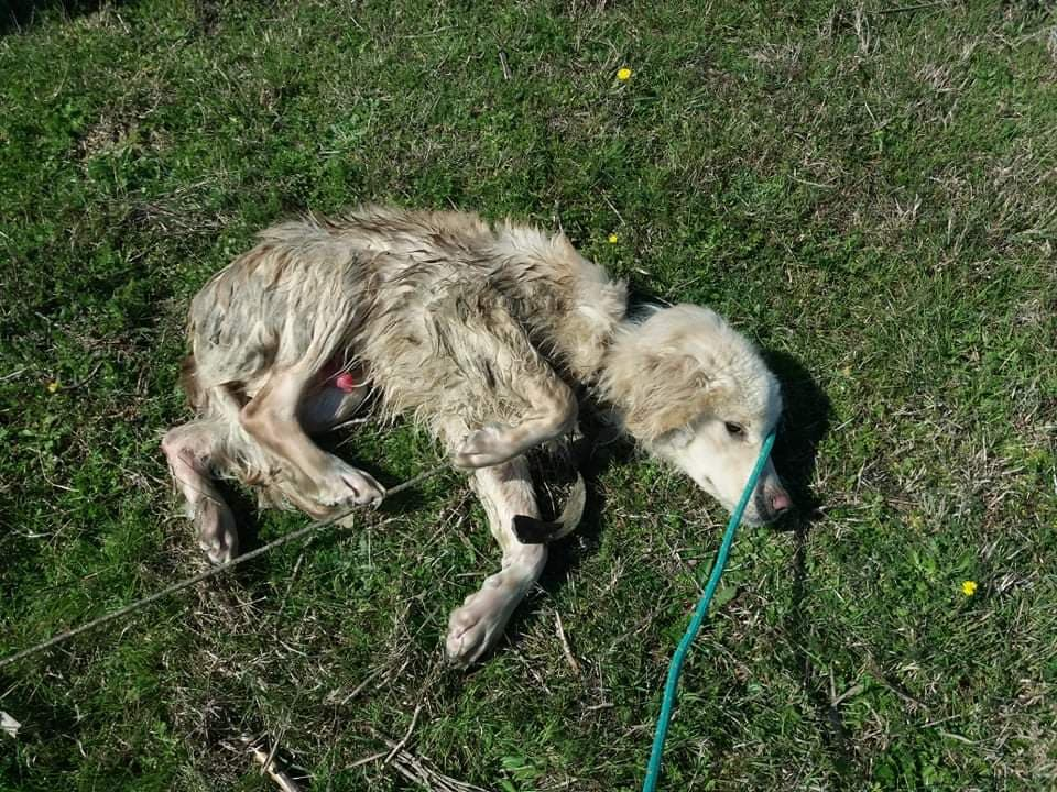 Albania's Stray Dogs in Crisis Due to Coronavirus Lockdown, Activists Ready to Help but Refused Permit to Move