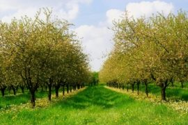 Albanian Minister Claims Agriculture Needs No Financial Relief, Farmers Disagree