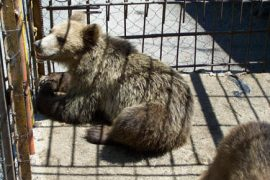 EXCLUSIVE: Four Paws Speaks on Bear Meat, Illegal Wildlife Trade, and Animal Cruelty in Albania