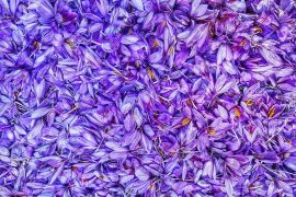 Places to Visit: The Saffron Farms of Berat