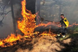 Municipalities, Police, and Local Structures Called on to Do More to Fight Albanian Forest Fires