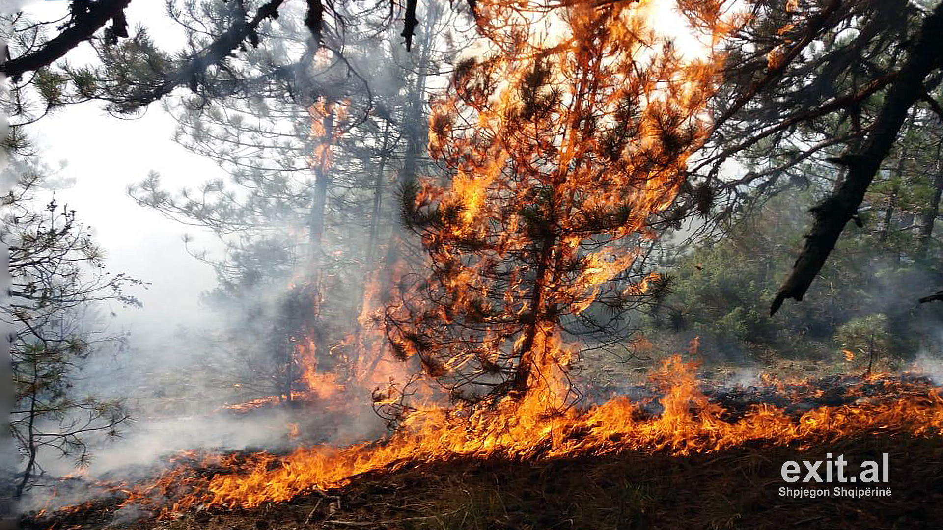 Forest Fires Rage Across Albania as Temperatures Continue to Rise