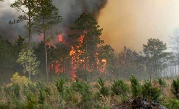 Forest Fire Rages for Two Days in Roskovec
