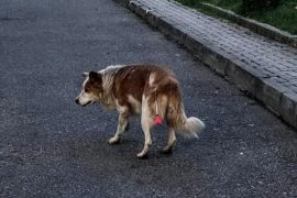 Protests Held in Front of Tirana Municipality Over Stray Dog Poisonings
