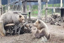 "Two Bears Rescued from Albania Set to Move to ""Forever Home"""