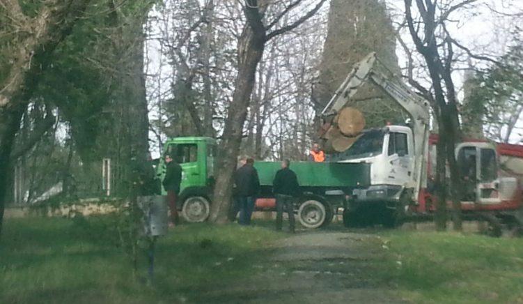 Kryebashkiaku Veliaj masakron pemët e parkut dhe mashtron publikun