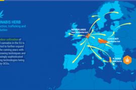 Qendra Evropiane për Drogën: Shqipëria vend burim i kanabisit, vend tranzit për kokainën e heroinën