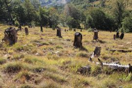 Shqipëria, i vetmi vend në Evropë që pret 5 herë më shumë pemë se sa mbjell