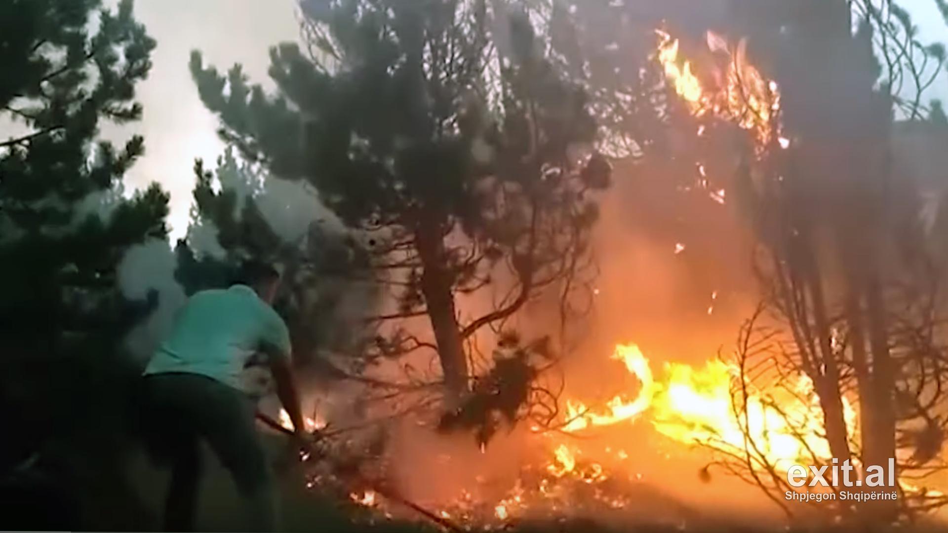 Djegiet e pyjeve në bregdet të qëllimshme, por ligji ndalon tjetërsimin e tokave të djegura