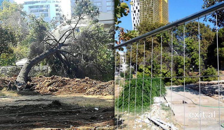 Rehablitimi i Parkut Rinia vazhdon me shkulje pemësh