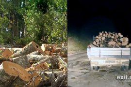 Vazhdon prerja e pemëve në parkun kombëtar Shebenik-Jabllanicë