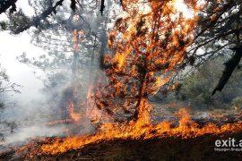 Zjarret kërcënojnë pyjet në Devoll, Bulqizë e Kukës, situatë e rëndë edhe në Rugovë të Kosovës