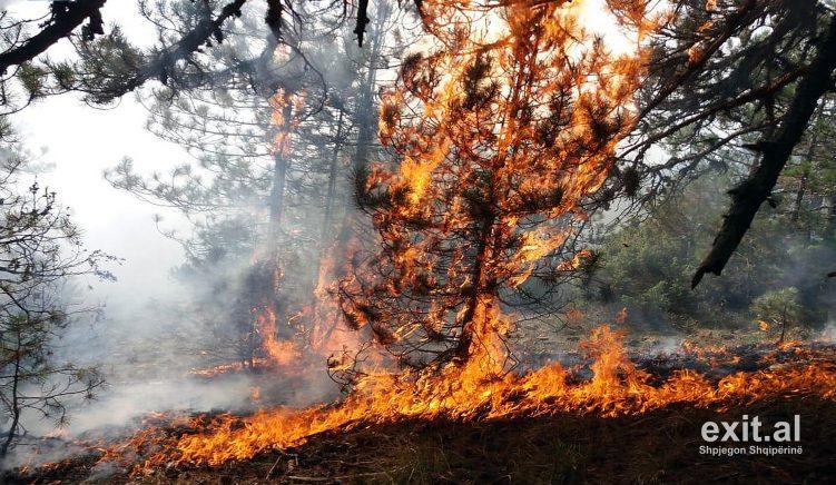 Zjarret po rrezikojnë dhe pyjet pranë Ranës së Hedhun në Shëngjin