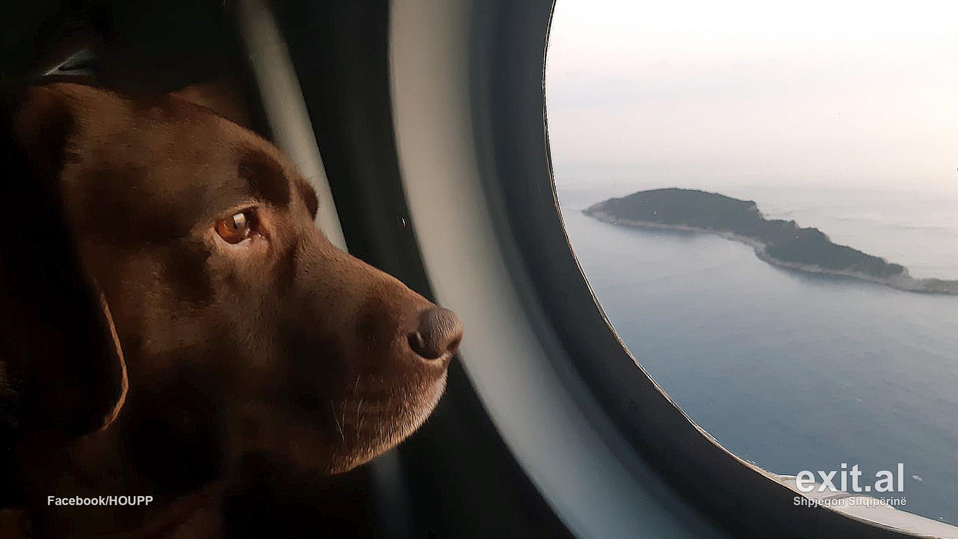 Kush janë qentë heronj të ekipeve të huaja të kërkim-shpëtimit