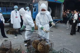 Kina ndalon tregtinë dhe konsumin e kafshëve të egra