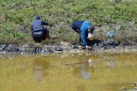 Krimi mjedisor në Porto Romano, autoritetet heshtin për derdhjen e naftës në det