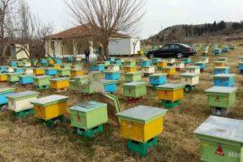 Koronavirusi parajsë për industrinë e prodhimit të mjaltit