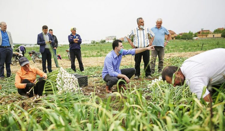 Basha: Qeveria la pa asnjë ndihmë fermerët, po falimentojnë