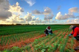 15 mijë shqiptarë aplikuan për punë sezonale në Greqi
