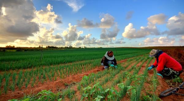 Nga 15 janari nis aplikimi i fermerëve për naftën pa akcizë