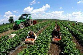 Qeveria i bën thirrje fermerëve të pajisen me NIPT