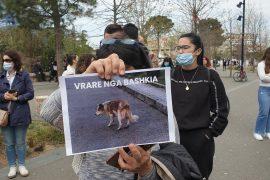 Protestë në Tiranë kundër vrasjes së kafshëve të rrugës